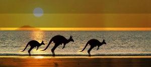 kangaroo image